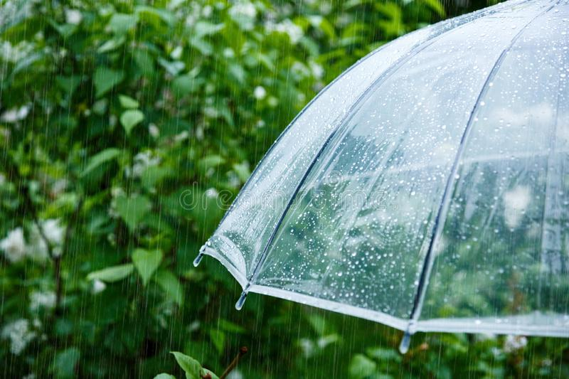 Close up Transparent Umbrella with water drops during the rain with green leaves tree on the blur background. Rainy weather. At spring, summer royalty free stock photos