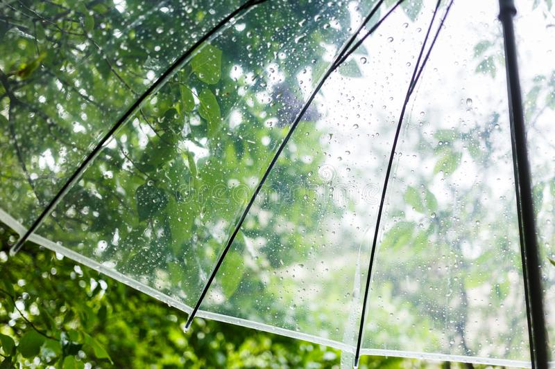 Close up Transparent Umbrella with water drops during the rain with green leaves tree on the blur background. Rainy weather. At spring, summer royalty free stock photography