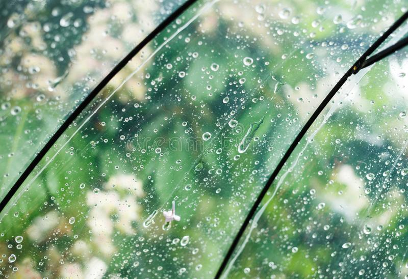 Close up Transparent Umbrella with water drops during the rain with green leaves tree on the blur background. Rainy weather. At spring, summer royalty free stock photo