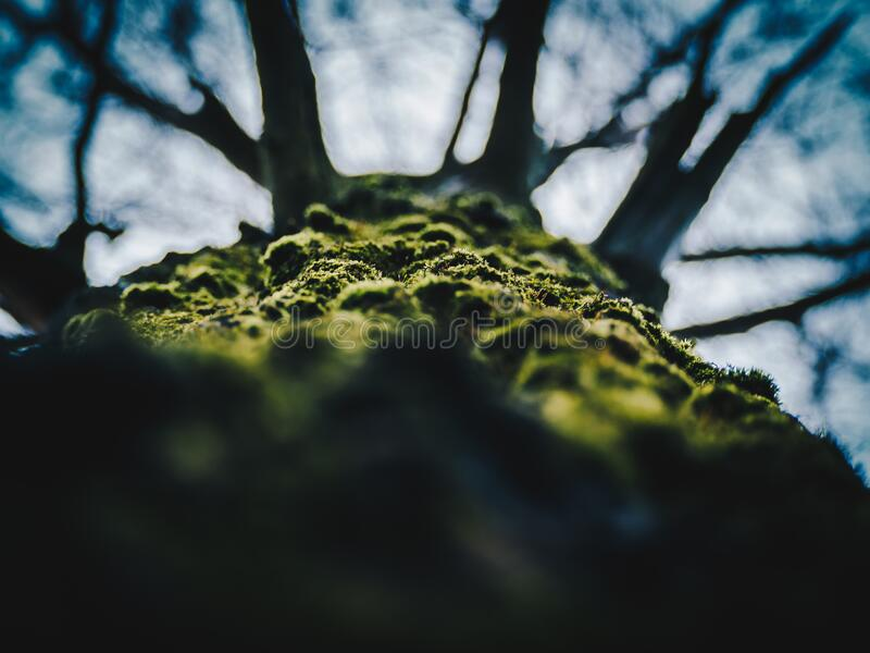 Close-up of Tree Against Sky royalty free stock images