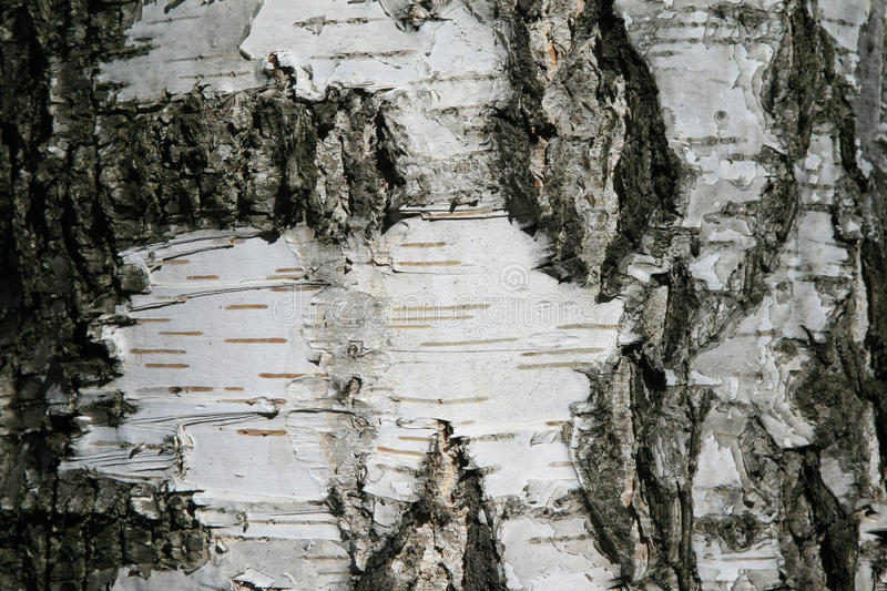Close up of tree bark details - background or texture royalty free stock photos