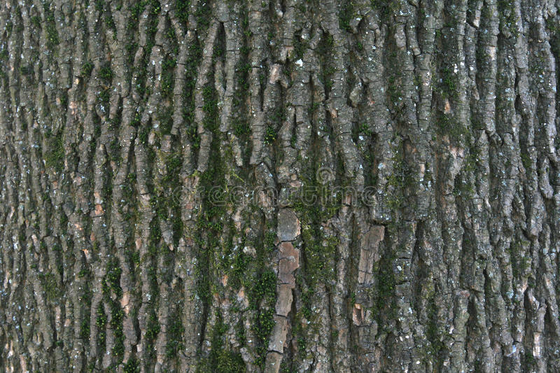 Close up of tree bark details - background or texture stock images
