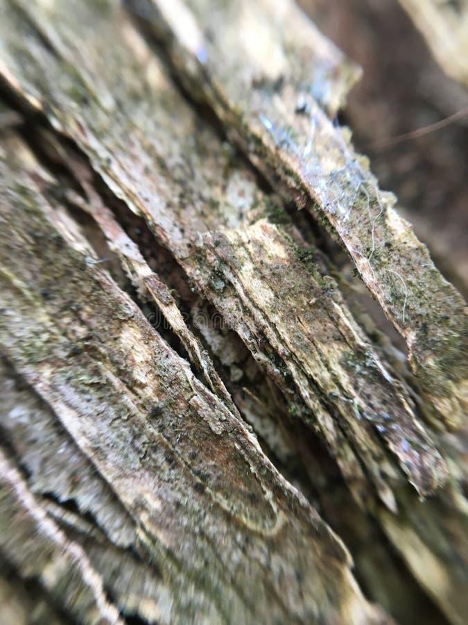 Close up of tree bark royalty free stock photo