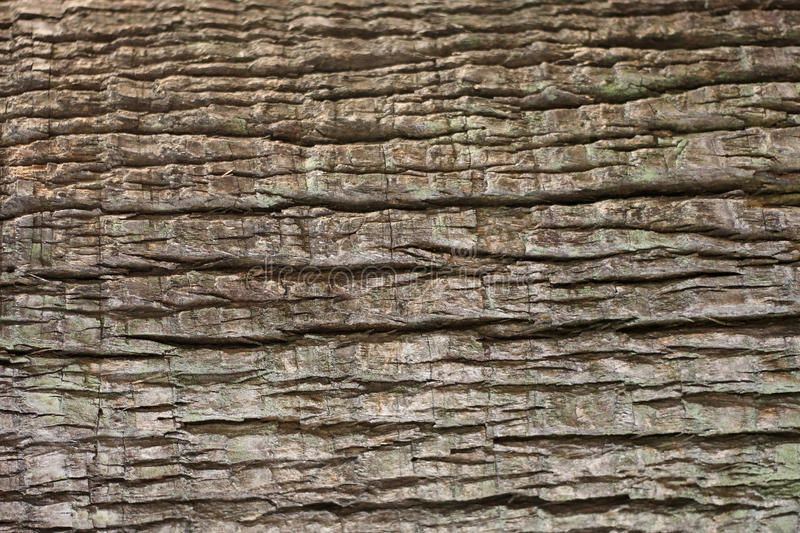 Close up of tree bark texture for background.  royalty free stock photography