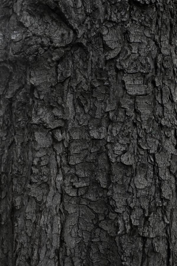 Close-up of a tree bark royalty free stock photos