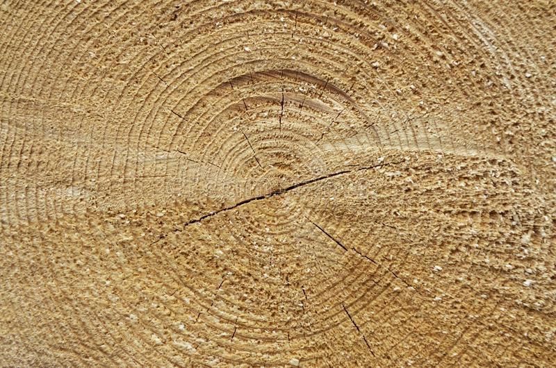 Tree Cut Trunk With Wood Rings Stock Photo - Image of bark, element
