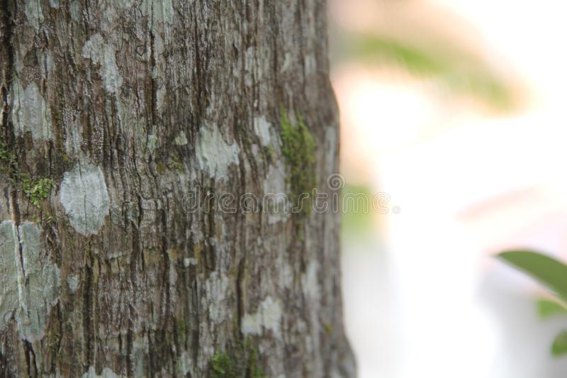 Close up on tree stump with moss royalty free stock photos