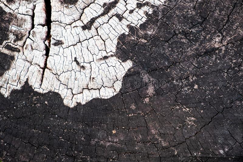 Close-up of tree stump with rough texture and annual ring background with white color in the center. stock photography
