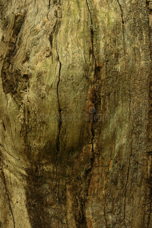 Download Close Up Of Tree Trunk Royalty Free Stock Photo - Image: 5379795