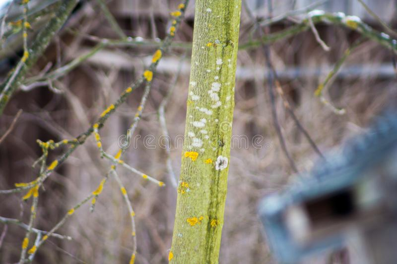 Tree trunk covered with yellow lichen and fungus. Close up tree trunk covered with yellow lichen and fungus royalty free stock photography