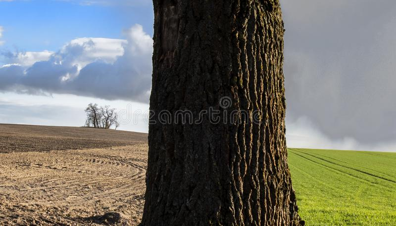 Tree trunk in field. A close up of a tree trunk and green and brown fields with clouded and blue sky above them in the background royalty free stock images