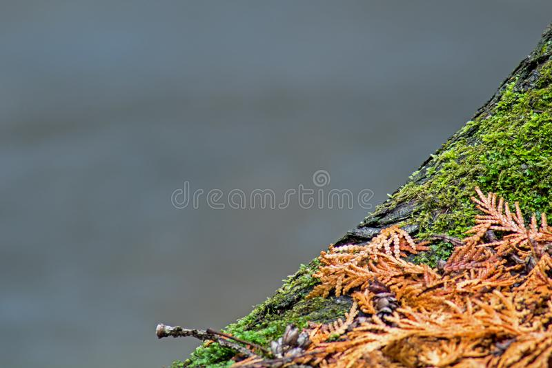 Close-up Tree Trunk With River In Background royalty free stock photos