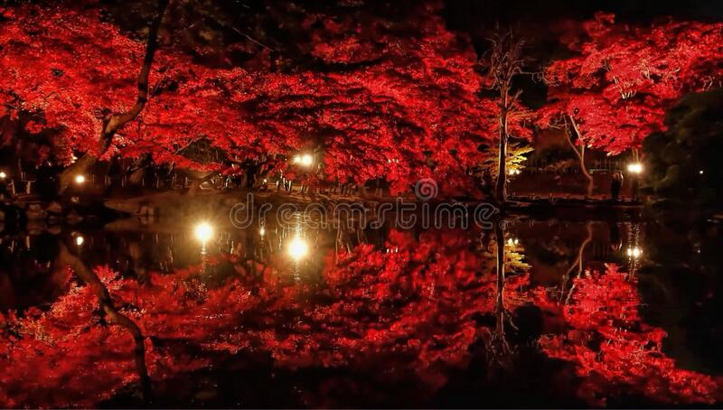 Close-up of Trees by Lake at Night royalty free stock images