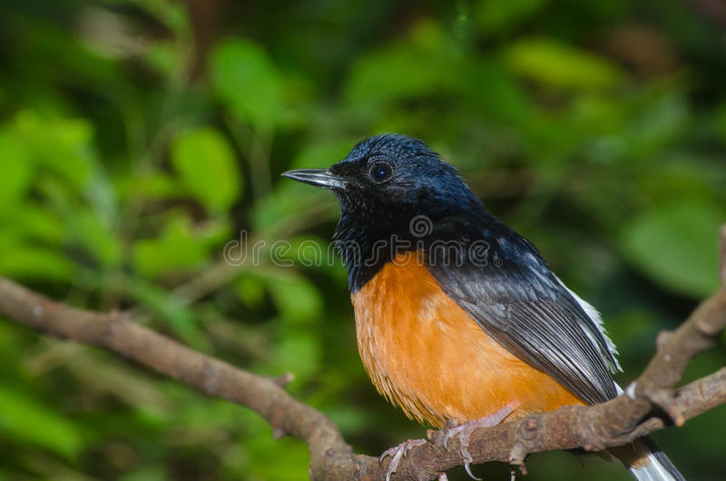 Close up for tropical bird. At Rotterdam Zoo, Netherlands royalty free stock photography