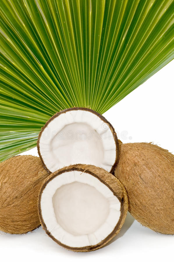 Close-up of tropical coconuts
