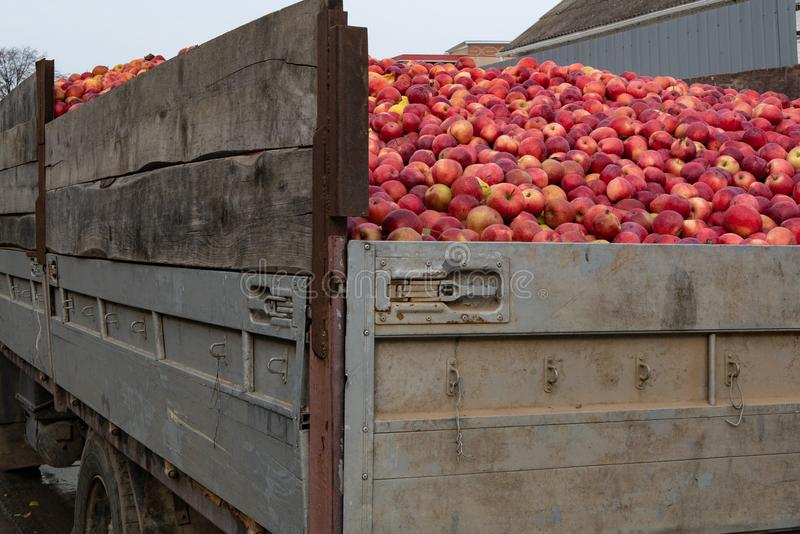 Close up of truck full of red ripe apples. Ready for export. harvest, fruitfulness, agriculture concept stock image