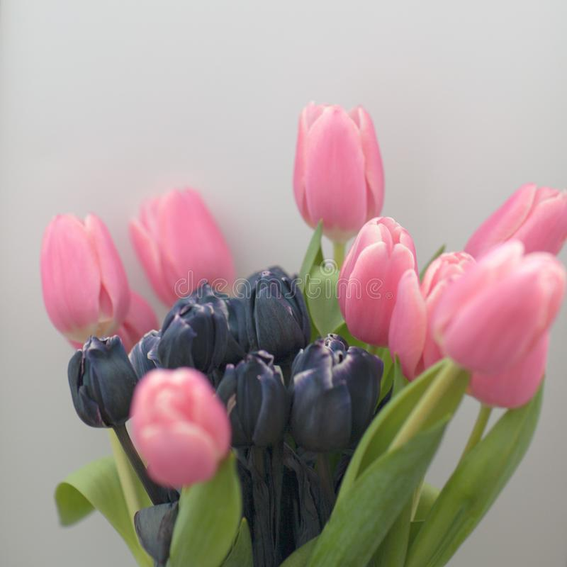 Tulips in a vase with blur and soft focus effects . Pastel colored abstract tulip. stock photos
