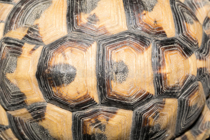 Close up of turtle shell. Patterns on tortoise shell closeup stock photography
