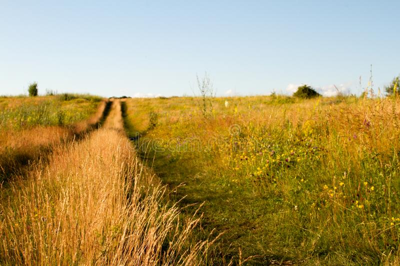 Close-up two-track dirt road in a flowering grassy meadow against a blue sky, selective focus stock photo