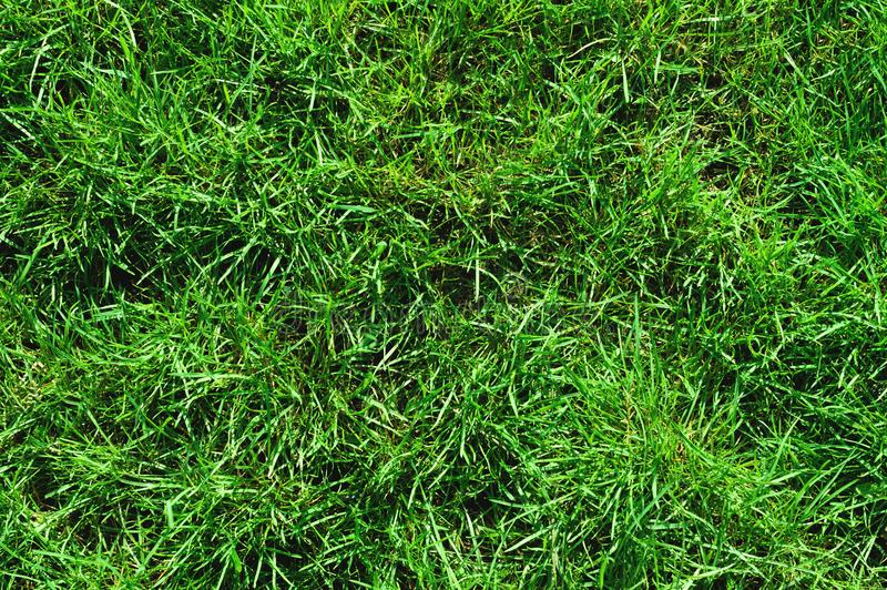 Close-up of uncultivated wild green lawn. View from above. Green juicy grass background for spring and summer royalty free stock photography