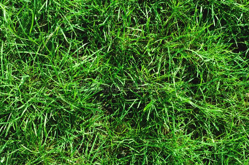 Close-up of uncultivated wild green lawn. View from above. Green juicy grass background for spring and summer royalty free stock images