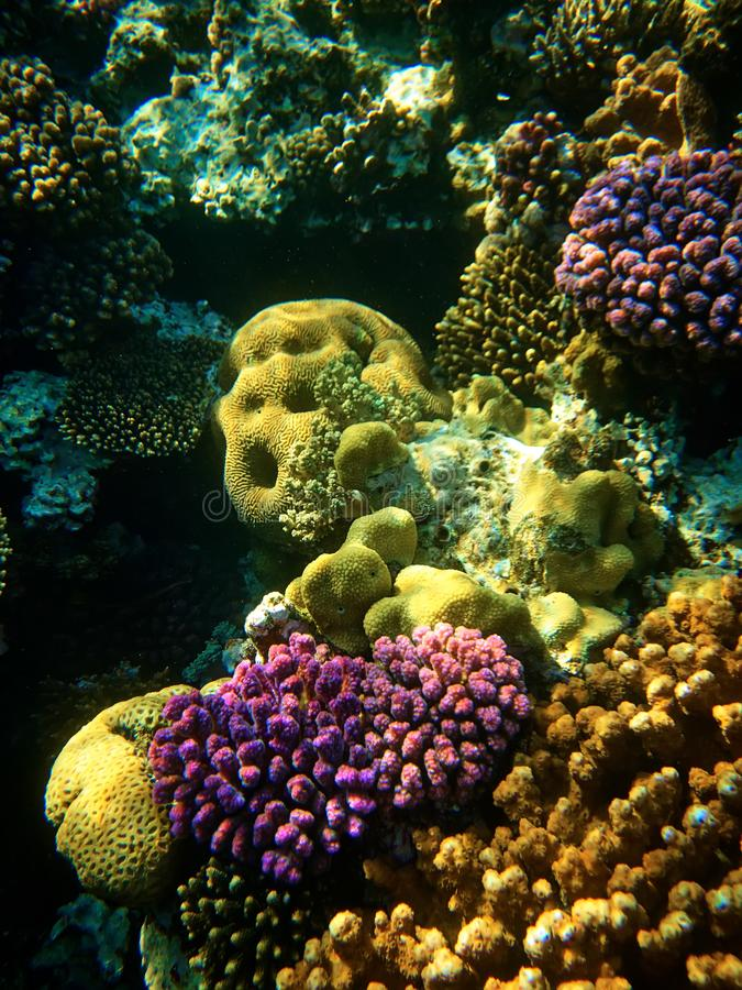 Close up underwater photo of coral reefs in red sea stock images