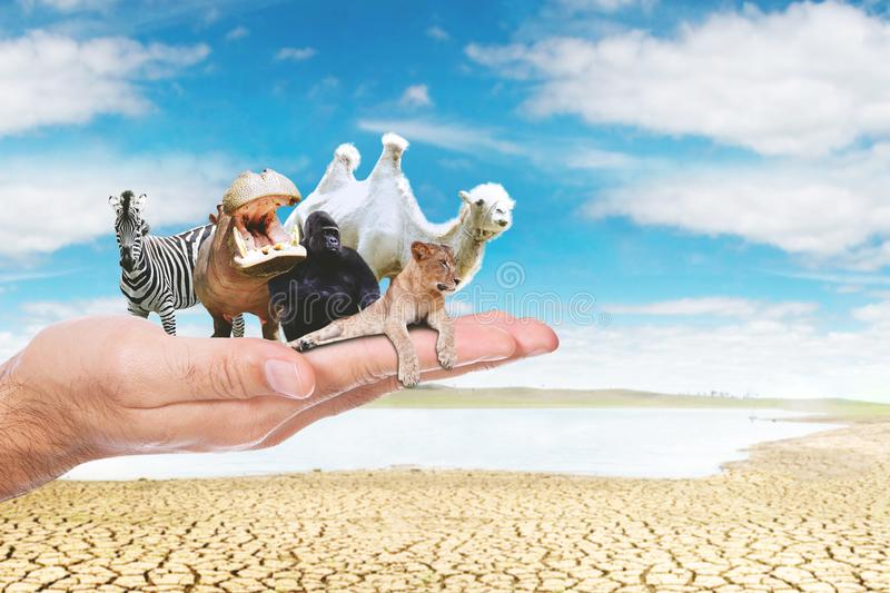 Unknown man hands holding endangered animals. Close up of unknown man hands holding endangered animals with a dry river background. Concept of global warming stock photography