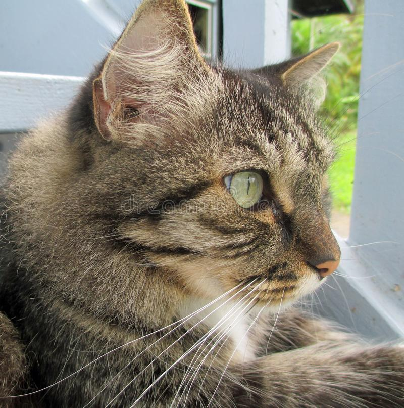 Close up Side Profile of Gray Stripe Cat on blue stairs royalty free stock photography