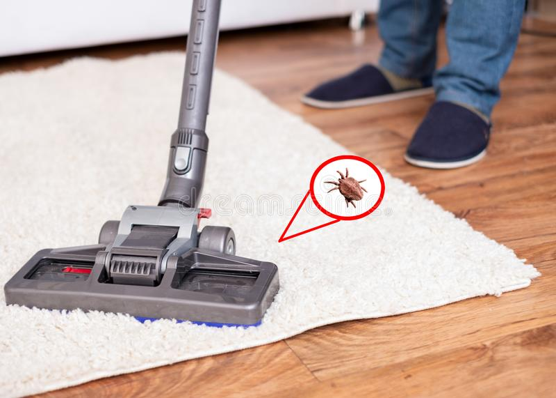 Vacuuming white carpet using the vacuum cleaner. Close up of vacuum cleaner cleaning dirty carpet royalty free stock photo