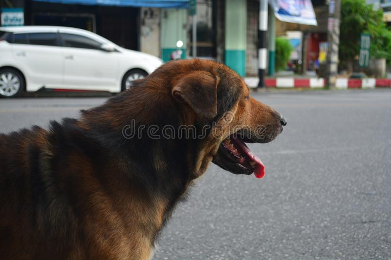 Close-up vagrant dog is  looking for something royalty free stock photo