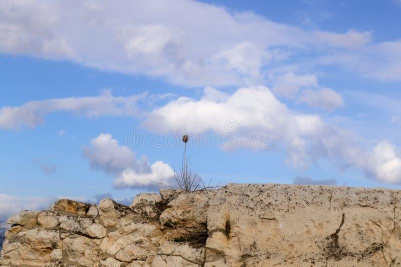 Close-up van één enkel droog onkruid op een ruwe die rotsmuur tegen een blauwe hemel met wolken wordt geschetst stock foto