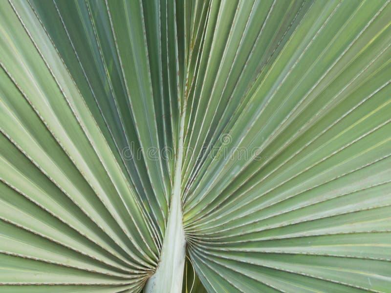 Close-up van achtergrond van het de textuurpatroon van het palmettoblad de abstracte stock fotografie