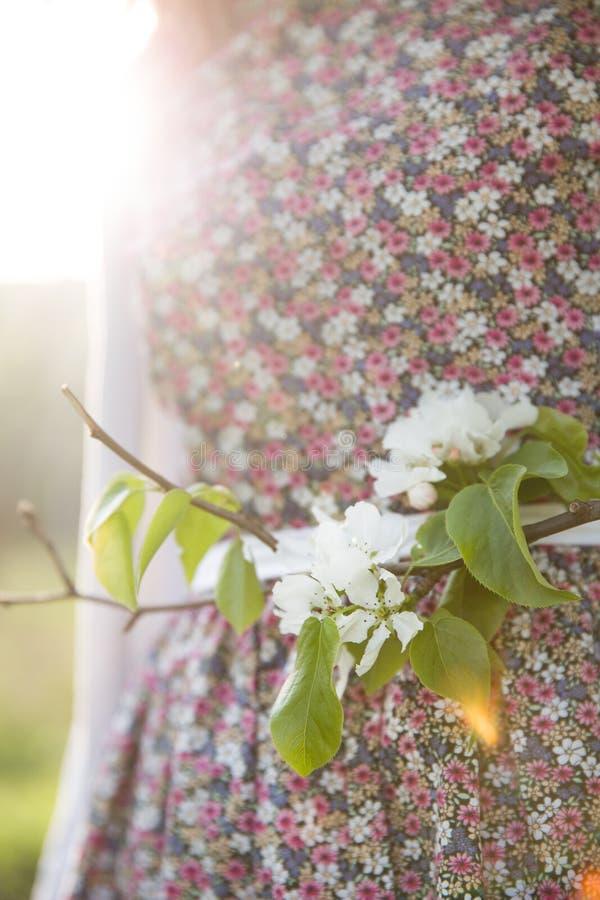 Close-up van appelbloesems in een zonlicht Woman' s kleding als achtergrond stock foto's