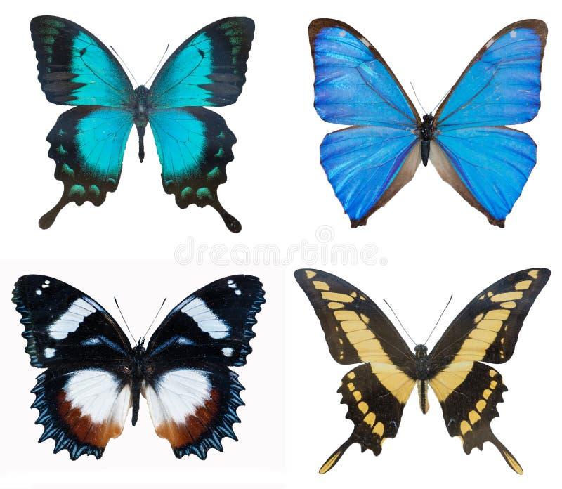 Close-up van Blauw van inzamelings multi-colored mooie vlinders royalty-vrije stock foto's