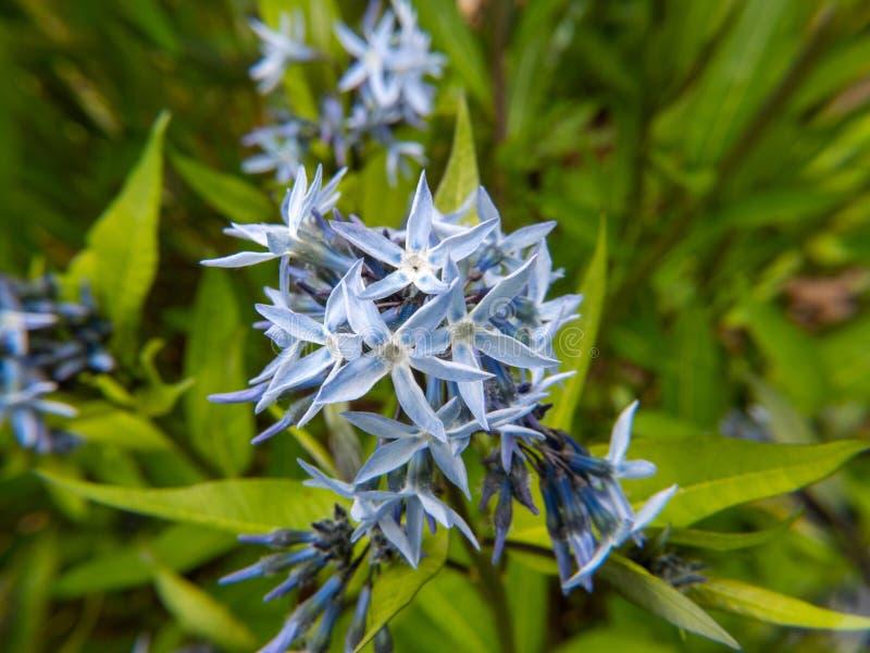 Close-up van bloem op groene achtergrond royalty-vrije stock foto