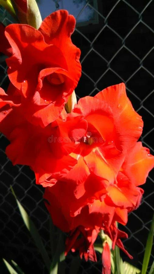 Close-up van bloemen royalty-vrije stock afbeelding
