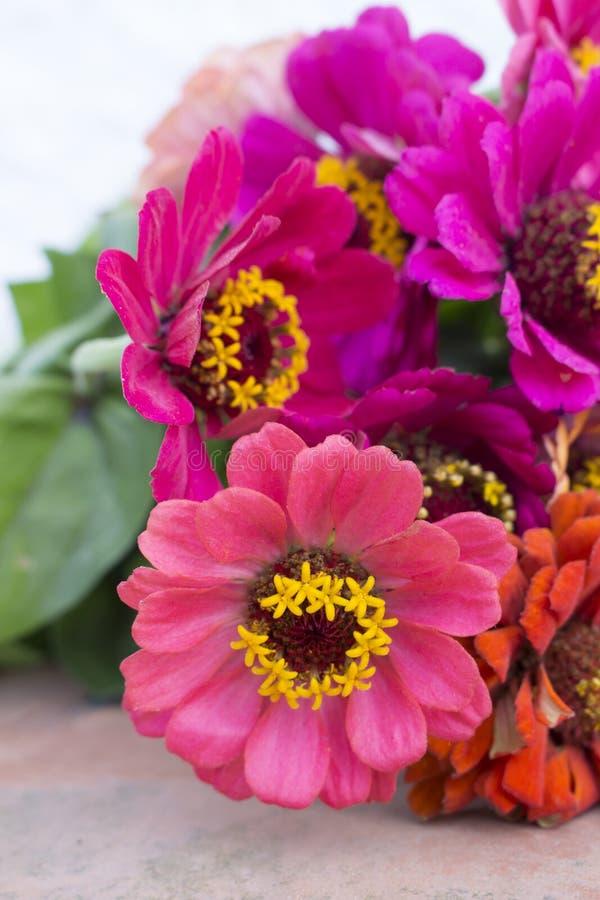 Close-up van bloemstuk van roze zinnias stock foto