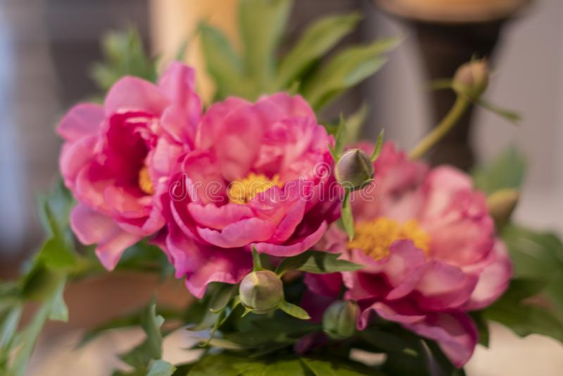 Close-up van boeket van roze pioenen stock foto's
