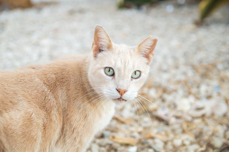 Close-up van de gember het verdwaalde kat, die de camera bij het Cat Park-gezichtspunt, in Albufeira-strand, Algarve, Portugal be royalty-vrije stock fotografie
