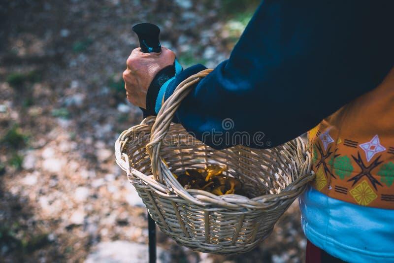 Close-up van de paddestoelenjager die van de vrouwenwandelaar een mand met paddestoelen houden royalty-vrije stock foto