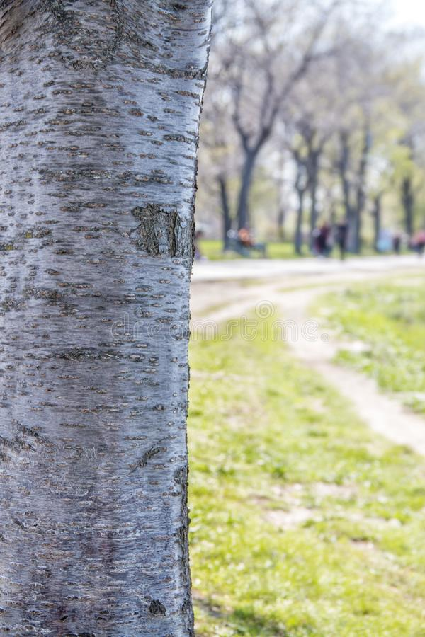 Close-up van de schors van een boom dichtbij een weg in een park stock afbeeldingen