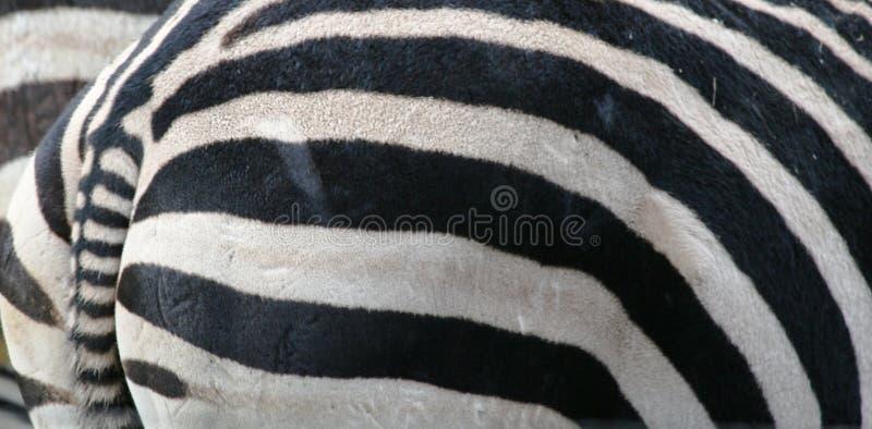 Close-up van Dier stock fotografie