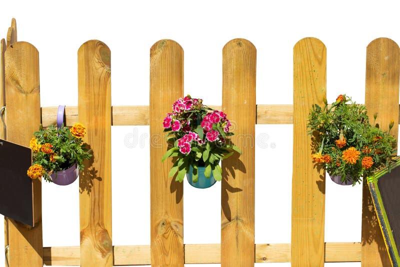Close-up van drie emmers met kleurrijke bloemen en twee lege zwarte raad die op een lichte houten omheining hangen De achtergrond stock afbeelding