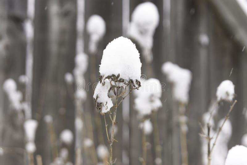 Close-up van droge die de winterinstallaties in diepe durin van de poedersneeuw worden behandeld royalty-vrije stock fotografie