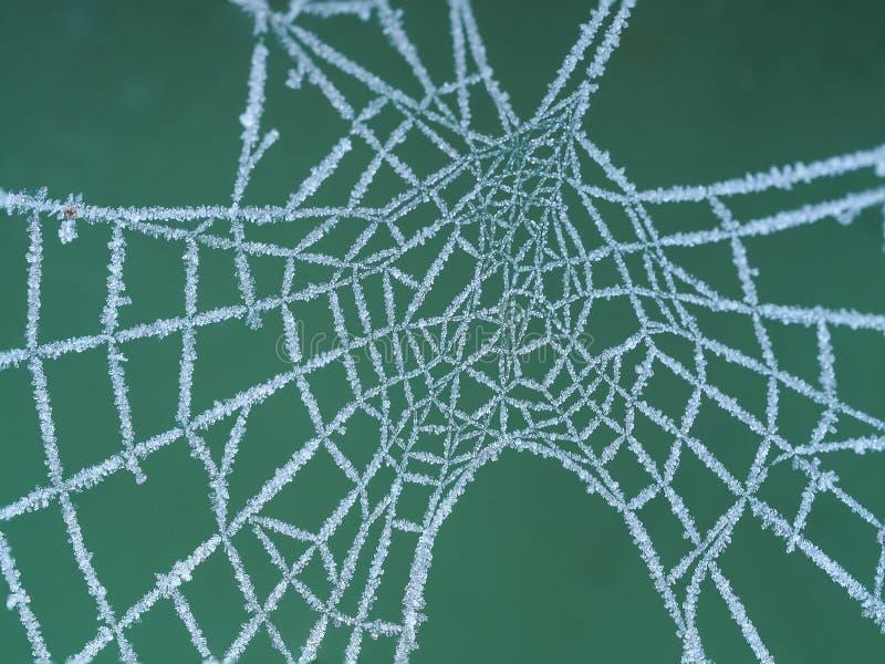 Close-up van een bevroren spinneweb royalty-vrije stock afbeelding