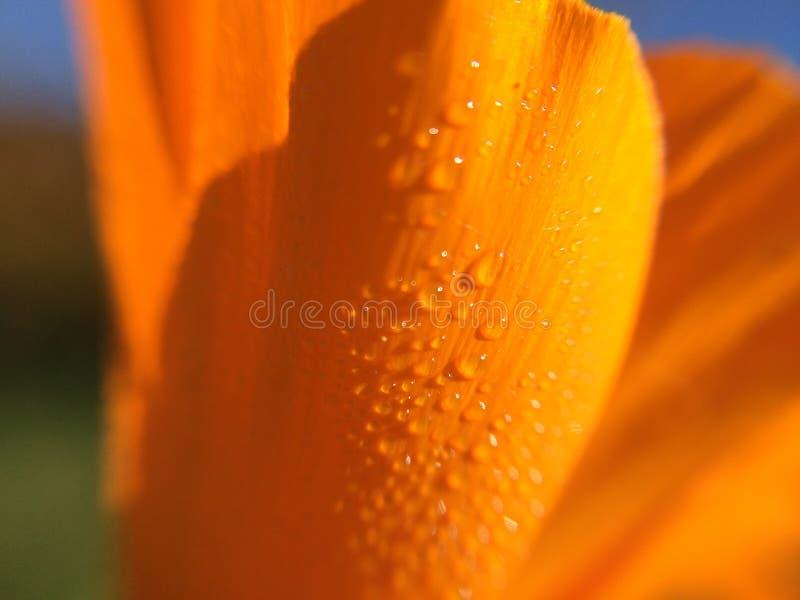 Close-up van een bloemblaadje stock fotografie