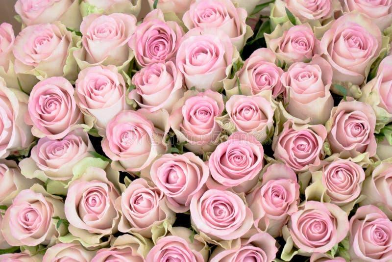 Close-up van een boeket van roze rozen royalty-vrije stock foto