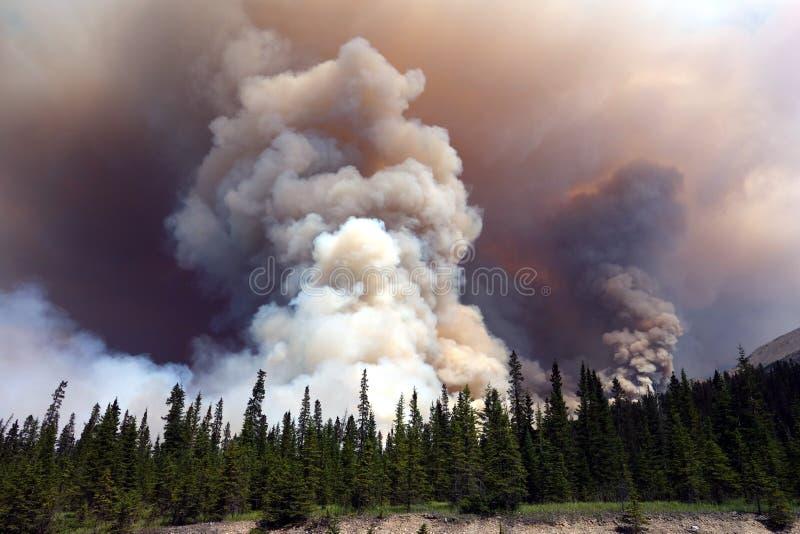 Close-up van een bosbrand bij banffpark stock afbeeldingen