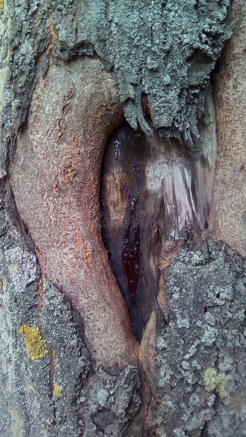 Close-up van een deel van de boomstam van een oude populier royalty-vrije stock fotografie