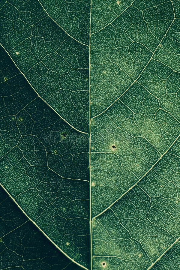 Close-up van een groene bladtextuur stock afbeeldingen